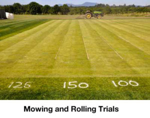 mowing and rolling trials